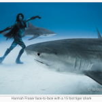 hannah-mermaid-underwater-shoot-tiger-shark