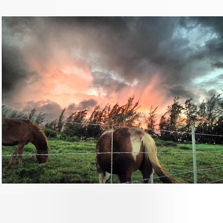 "Photo: Kimberly Lepold ""Horses What??…"""