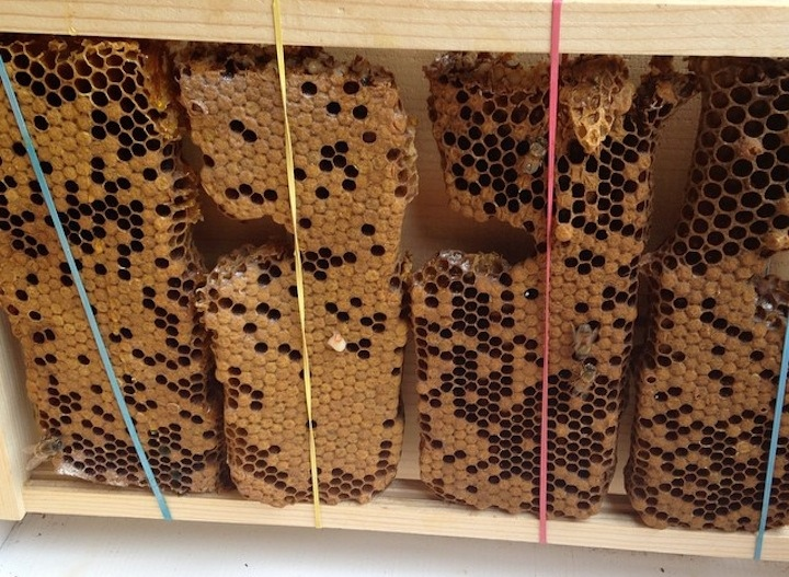 bees-in-house-helena-2