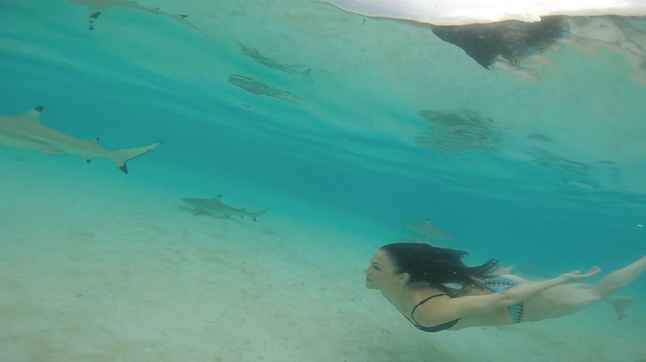 sharks rays tahiti moorea